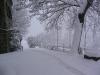 sous-la-neige-005