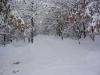 sous-la-neige-019