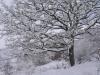 sous-la-neige-043